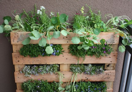 lifeonthebalcony-pallet-garden